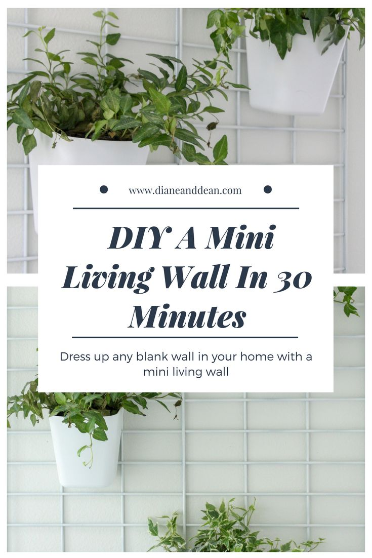 DIY living wall tutorial