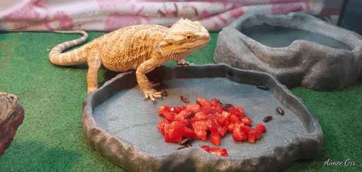 Best fruits vegetables and salads for bearded dragons