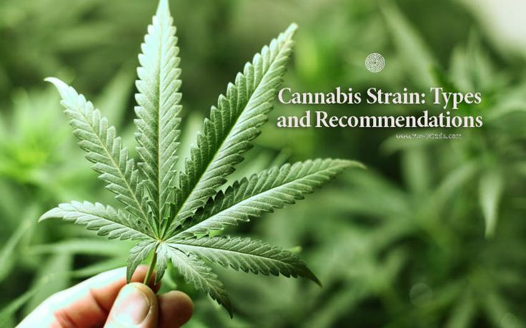 Cannabis Strain: Types and Recommendations - @psyminds17