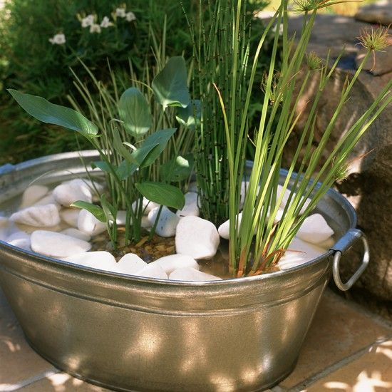 Container water garden for Garden pond plants uk