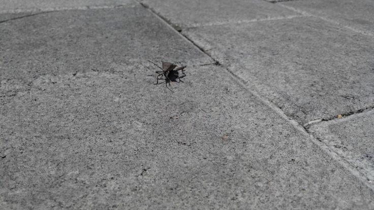 Bugs 05