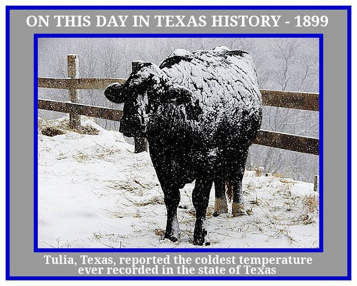 """ON THIS DAY IN TEXAS HISTORY - FEBRUARY 12th 1899 On this day in 1899, Tulia, Texas, reported the coldest temperature ever recorded in the state--minus 23 degrees Fahrenheit. This was part of the """"Big Freeze,"""" an infamous norther that killed 40,000 cattle across the state overnight. This temperature was matched in Seminole in 1933. The highest temperature recorded for Texas was 120."""
