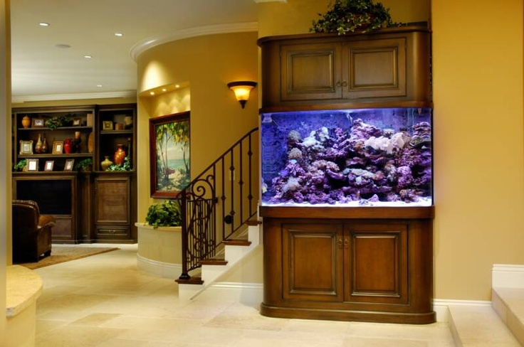 """Located as the focal of the main house, this 300-gallon saltwater reef aquarium has a sweeping curved left side . It measures 60""""x24""""x40"""" high and contains a variety of soft corals and fish"""