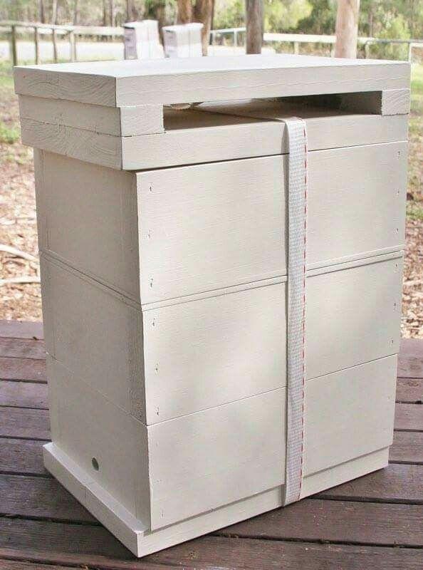 Native Bee hive in Hoop Pine