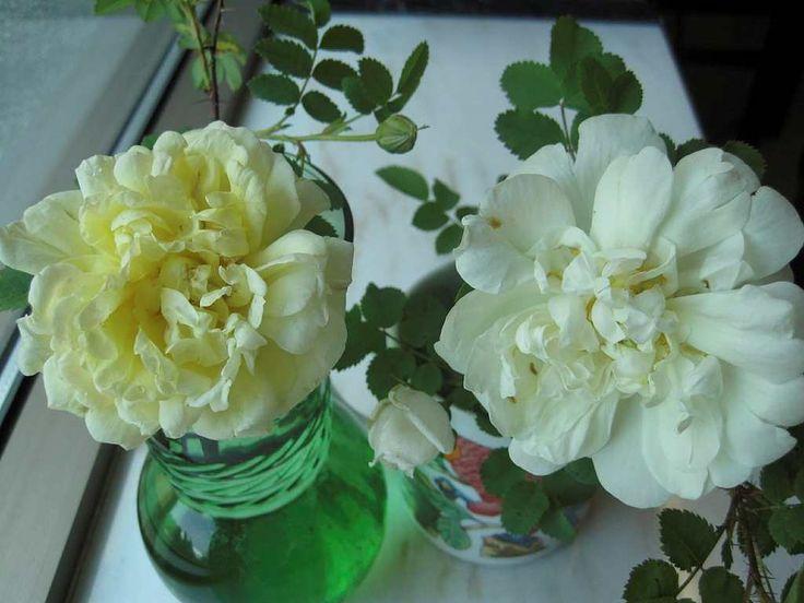 Cueillir et entretenir des fleurs coupées et les faire sécher pour créer des arrangements floraux.
