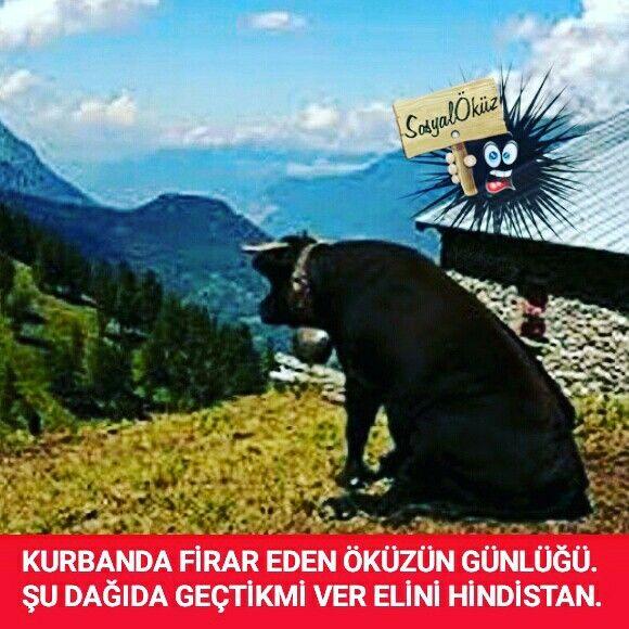 Hayat sevince, paylaşınca güzel! #sosyalöküz #öküz #komik #çok #çokkomik #resim #resimler #eğlence #eğlenceli #mizah #gülümse #gül #kahkaha #popüler #beğen #espriler #instaturkey #instagood #instalike #instalife #instalove #instapeople #instagram