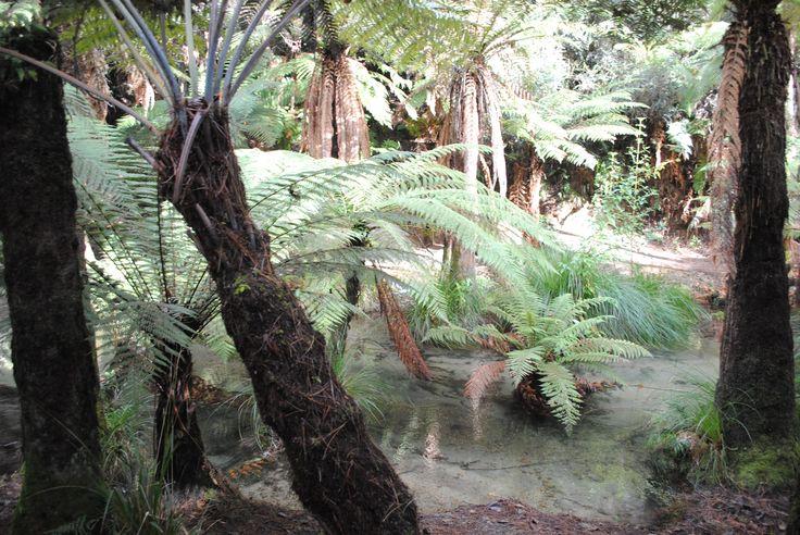 Forest / Rotorua / Perfect for biking or hiking / New Zealand