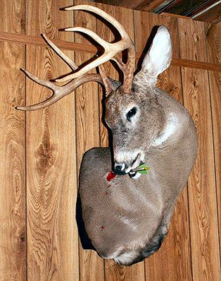 77 best images about whitetail mounts on Pinterest