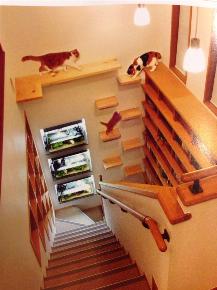 What a great use of space and my cats would love it