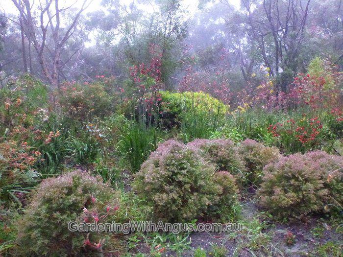Angus's Top Ten Australian Plants in Heavy Clay Soils