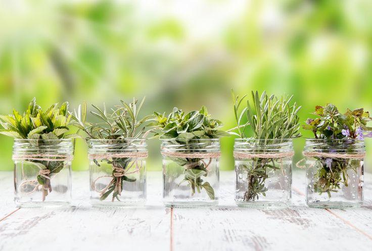 10 hierbas aromáticas que puedes cultivar en agua durante todo el año – La voz del muro