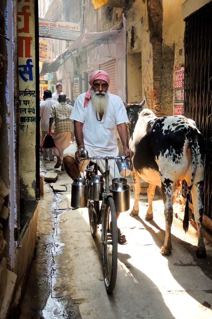 Milk vendor making his rounds. Varanasi, India