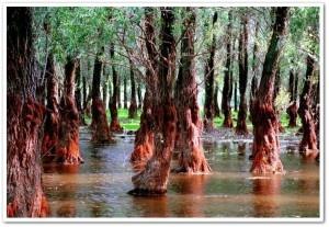 Delta Dunarii- The Danube Delta UNESCO monument