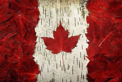 Autumn leaves and bark make a natural Canadian flag - Patriotic