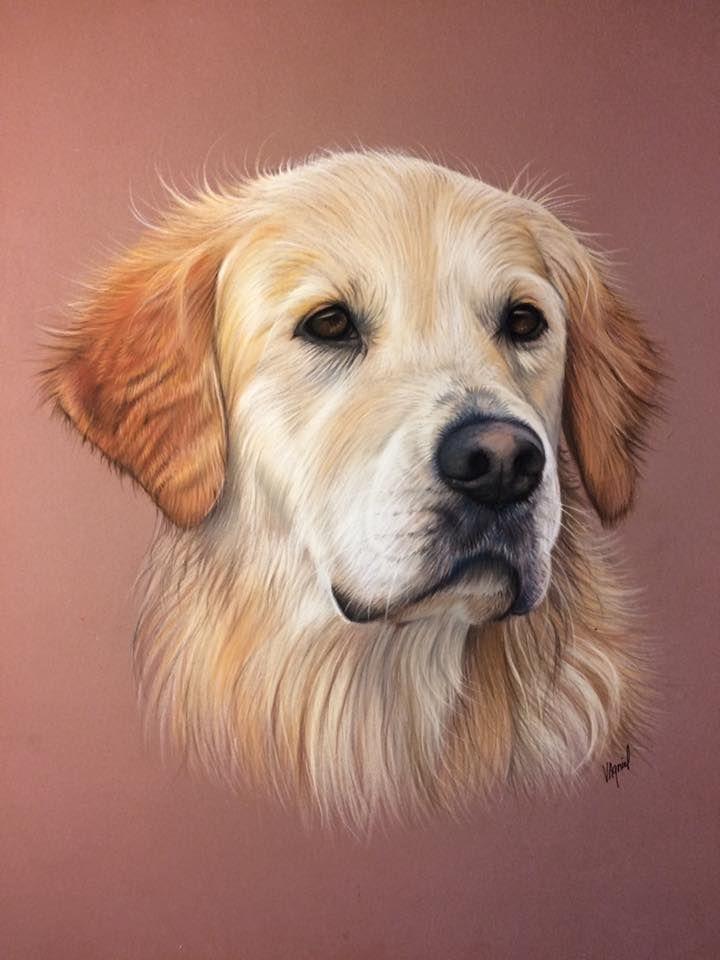Goldenretriever Art Dog Paintings Colorful Dog Art Golden Retriever Art