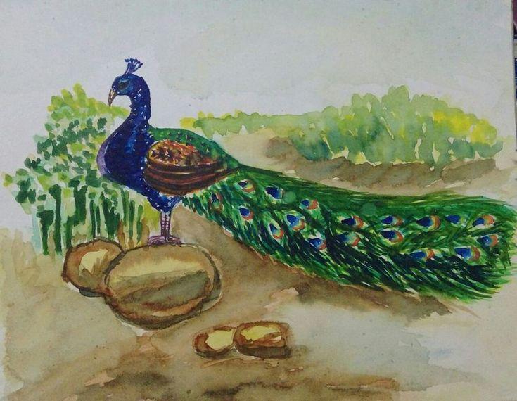 The elegant peacock
