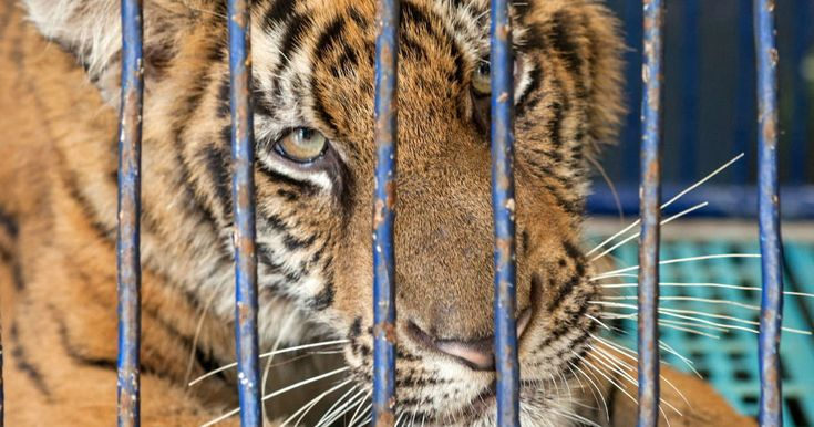 Instagram Warns Travelers About Irresponsible Wildlife Tourism Posts