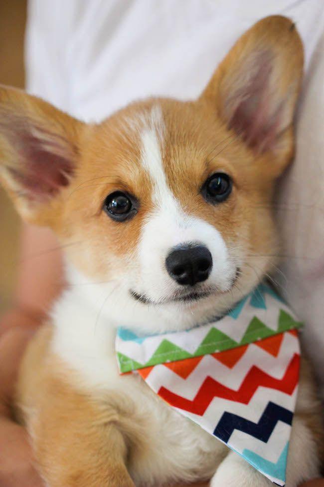 Inexpensive Cute Dog Collars