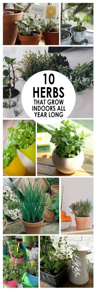 10-herbs-that-grow-indoors-all-year-long