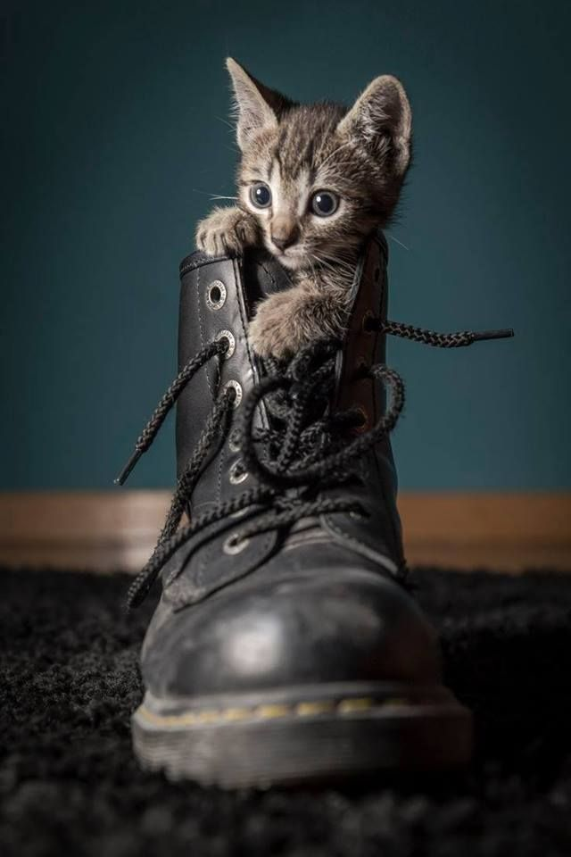 In the boot #cats #animals