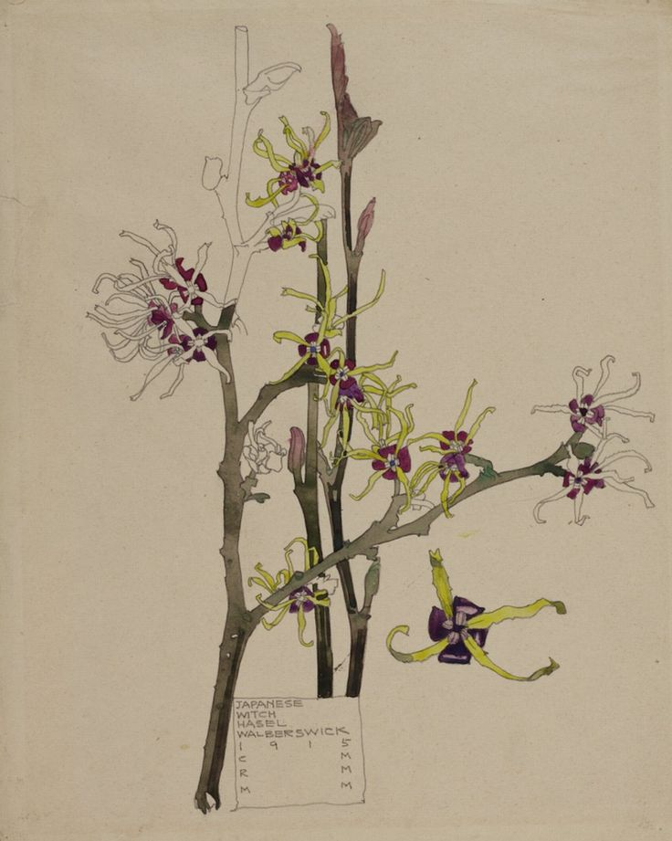 Hunterian Art Gallery Mackintosh collections: GLAHA 41013