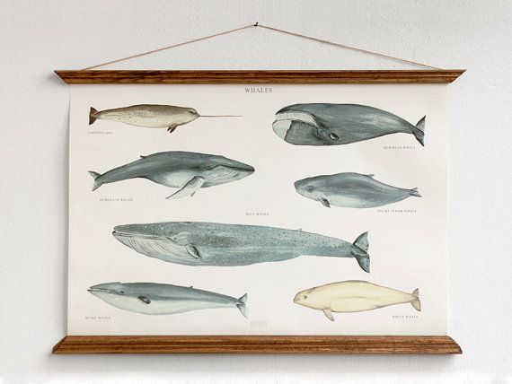 NEW ! A2 Whales Canvas poster  - vintage illustration educational wall chart illustration WAPA2002