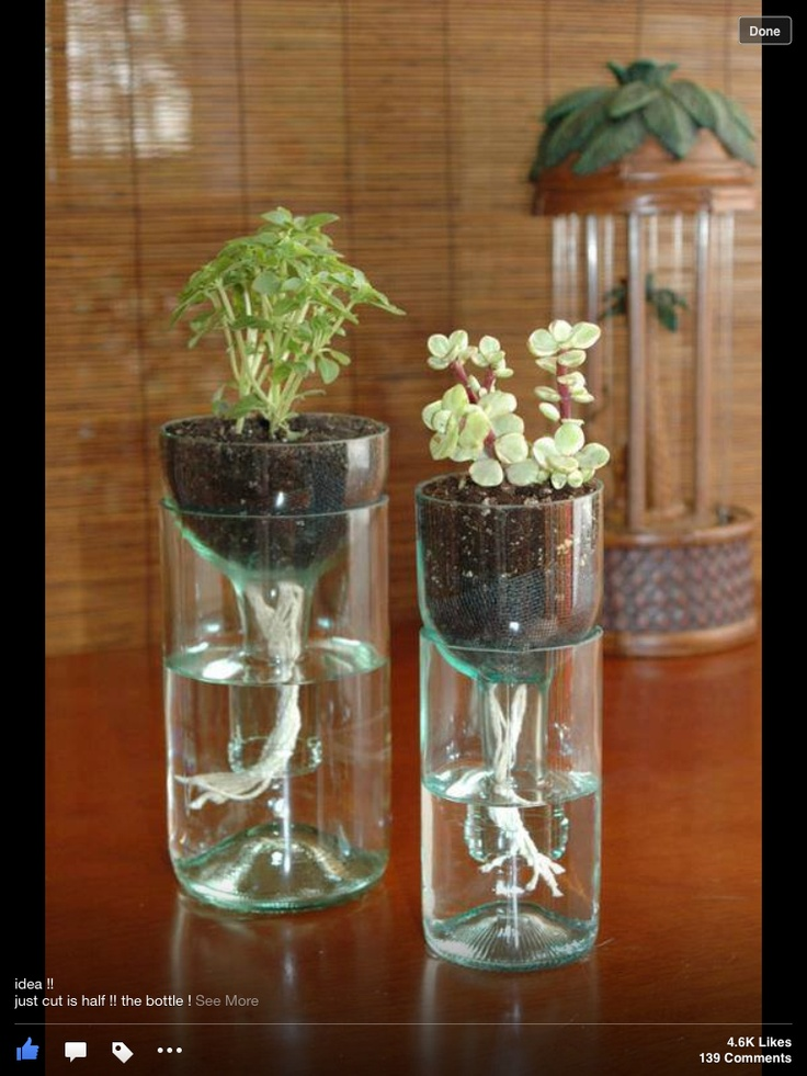 Recycle Soda Bottles Into Plant Holders Crafty Ideas