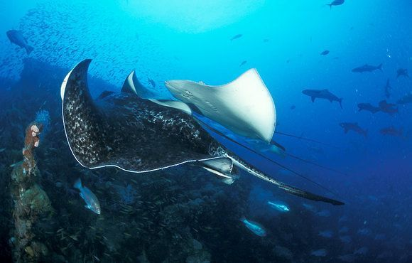Yongala Wreck & Coral Sea Liveaboard Expedition: 7N + 30 dives - $2,693