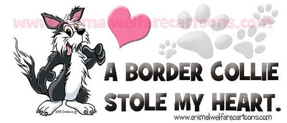 border collie quotes - Google Search