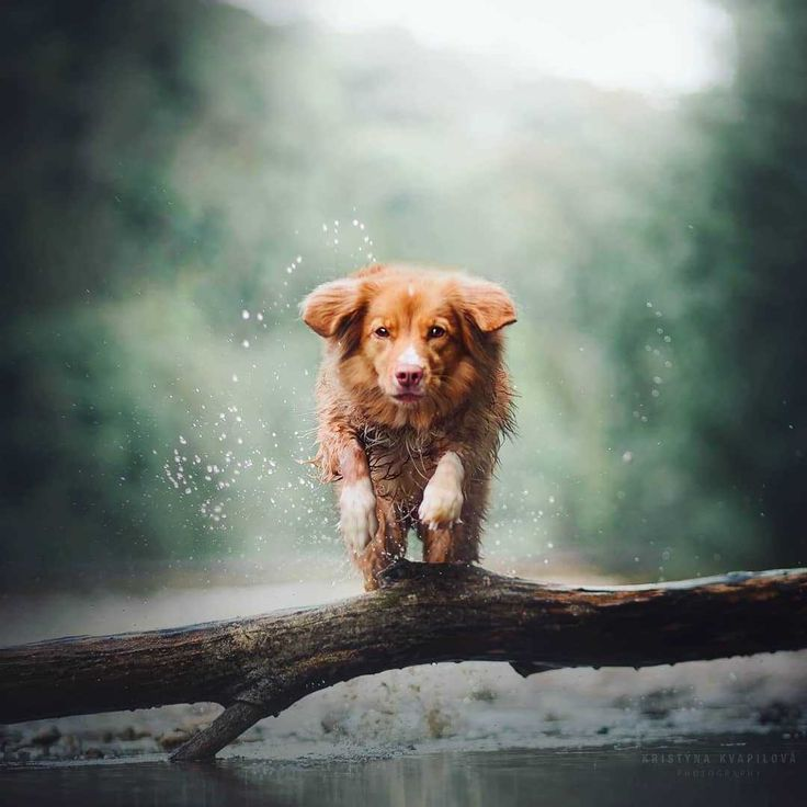 Beautiful And Magical Portraits Of Dogs By Kristyna Kvapilova