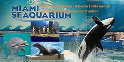 Miami Seaquarium : Release Lolita and all your captive animals to Sea SanctuariesCare2 : The Petition Site : My PetitionSite