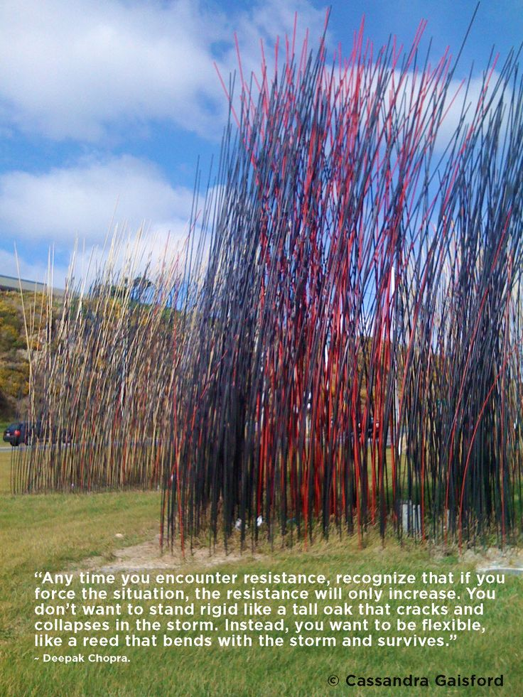 Going with the flow builds resilience and success - something we Wellingtonian's, buffeted all the time with gale force winds, know all about. This shot is of our fabulous reed sculpture near the airport.