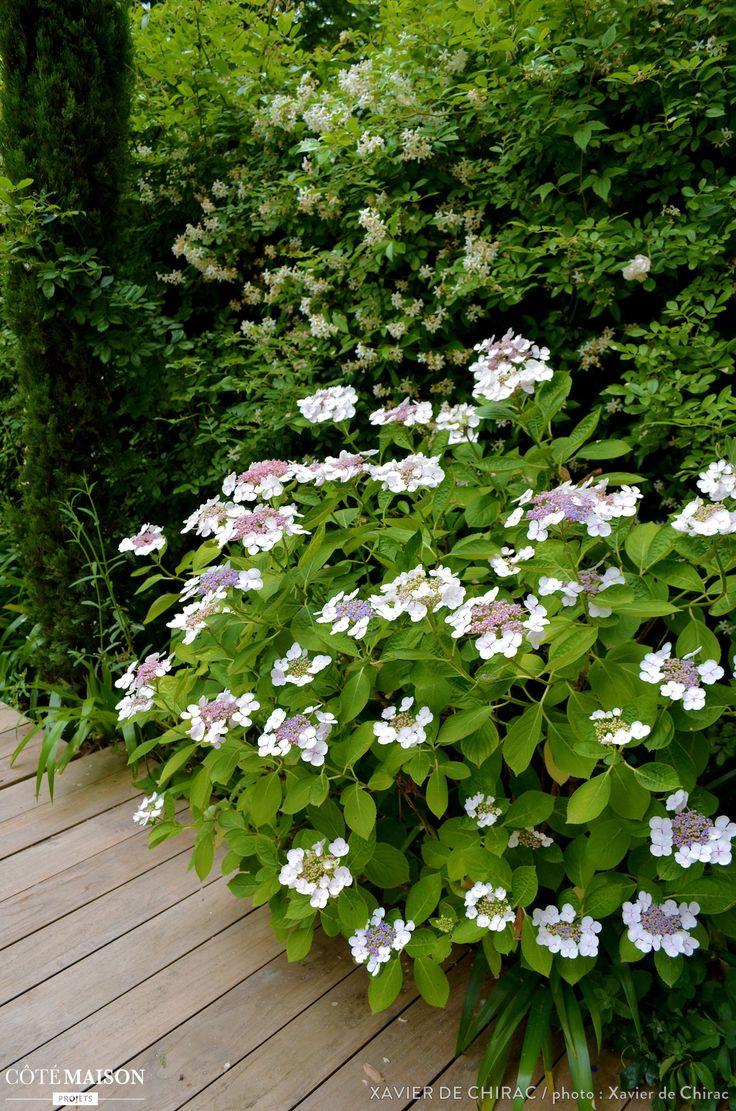 1000 id es sur le th me entretien hortensia sur pinterest for Jardin xavier
