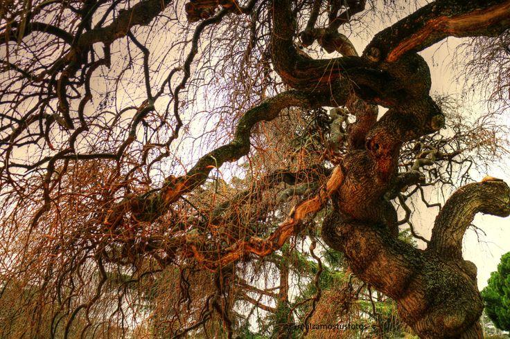 Fotografía digital de un sauce llorón en otoño. Foto digital. Otoño. de Realzamostusfotos en Etsy https://www.etsy.com/es/listing/485420547/fotografia-digital-de-un-sauce-lloron-en