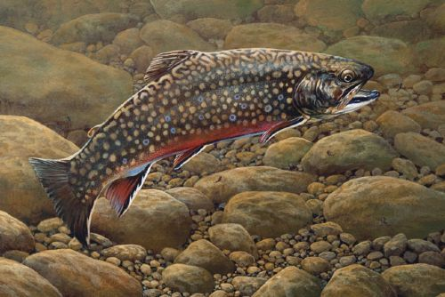 261 best images about brook trout on pinterest fly shop for Best trout fishing in pa