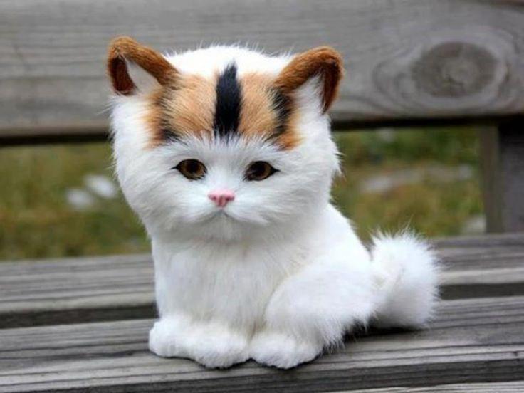 #Cute #Cats #videos of cute #kittens  2016  #funny cat in kitten videos ...