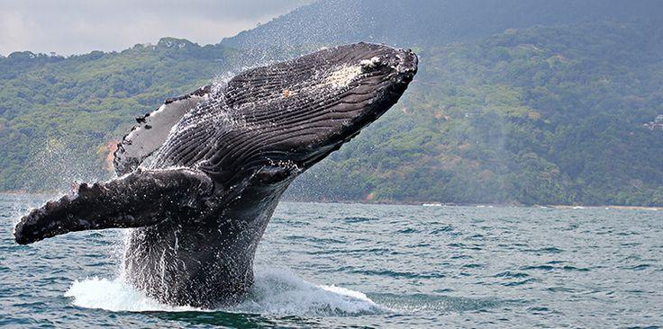 Maui Whale Watching & Snorkel Crusie