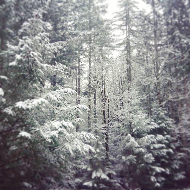 【asformydays】さんのInstagramの写真をピンしています。《#nature #snow #forest #trails #goodmorning #washington #washingtonstate #seattle #pacificnorthwest #pnw #happy2017 #happynewyear #ワシントン #ワシントン州 #アメリカ #林 #森林 #森 #ウォーキング  #雪》