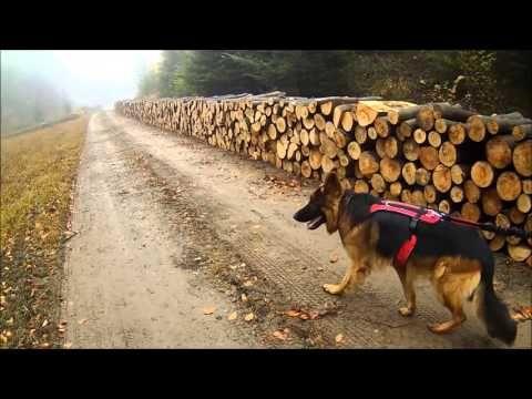 Pies w Bieszczadach   Zamerdani
