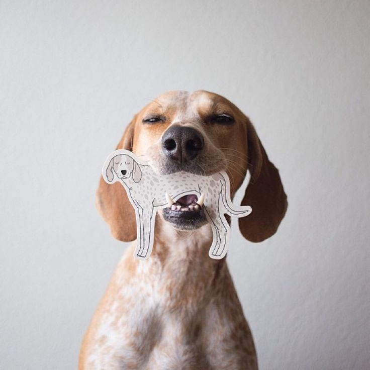 Dog, biting dog