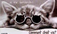 Carte chat : comment chat va ?