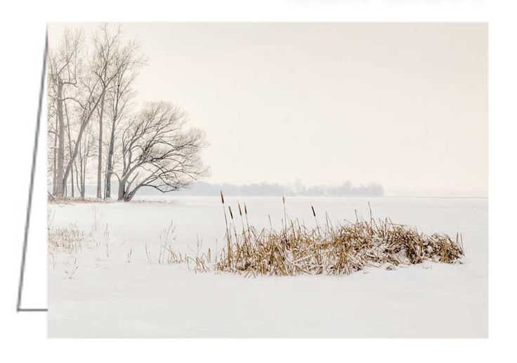 """Cattails by the Shore in Winter - Greeting Card. It is hard to tell where the shore ends and the Ottawa River begins. 5"""" x 7"""". Blank inside. Includes envelope. Buy online at Rob's Cards and Prints."""