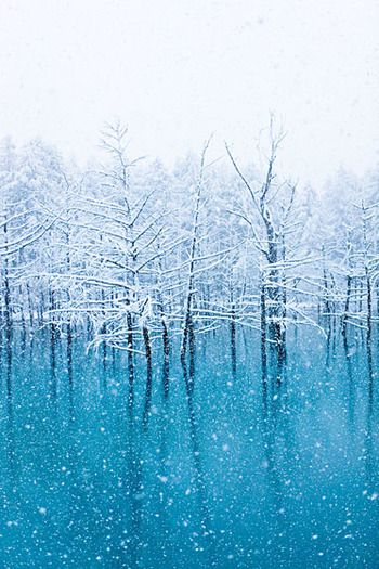 枝に積もった雪と青のコントラストが幻想的な冬の青い池。