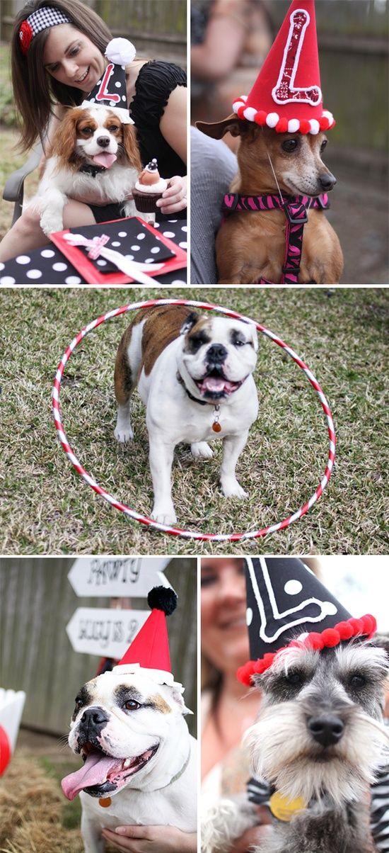 Fiestas de cumples para perros | wacapaka