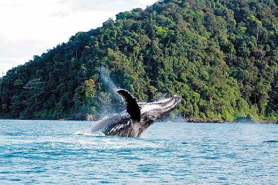Isla Gorgona. Suroeste insular de Colombia, Santuario de la naturaleza declarado Patrimonio de la Humanidad por la Unesco.