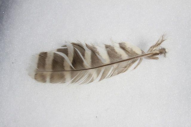 owl feather tattoo | owl feather | tattoo ideas!