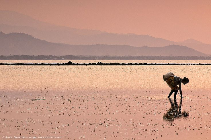 Shell Collector - East Timor, by Joel Santos | by Joel Santos - Photography
