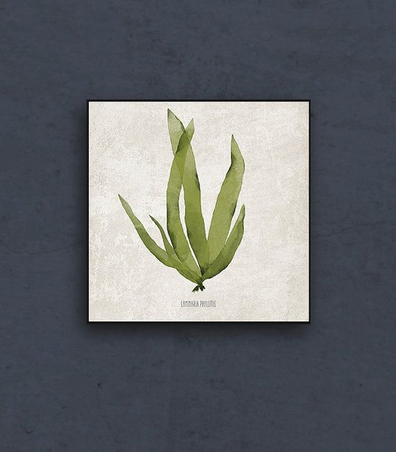 Sea weed art print in green. Botanical art by takeTHEPICTURE