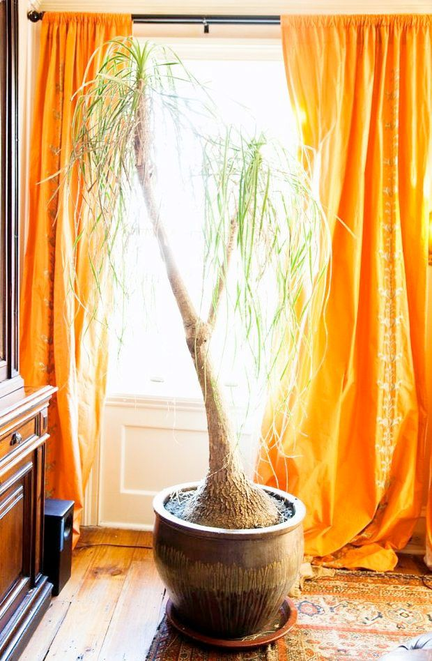 Best 25 Orange Curtains For The Home Ideas On Pinterest  Orange Unique Orange Curtains For Living Room Inspiration