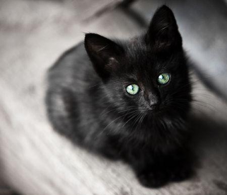 KD-8, Madox, Pandora van Tella  ''Ik bestudeer mijn Pandora: zijn zwarte vacht, zachte pootjes; zijn puntige,alerte oren. Wanneer zijn ogen de mijne vinden,hap ik vlug naar adem. Madox ogen hebben een briljante groene kleur, zo helder,dat ze lijken radioactief licht af te geven in de nacht.Mijn Pandora lijkt in alle opzichten op een babyvosje.''